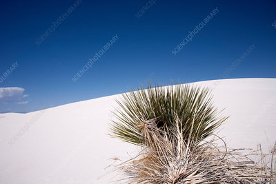 Grass in desert