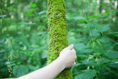 Hand touching moss on tree trunk