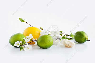 Aromatic still life with blossom lemon and lime