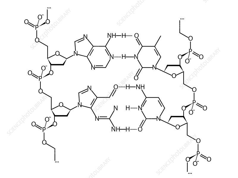 DNA, chemical structure formula