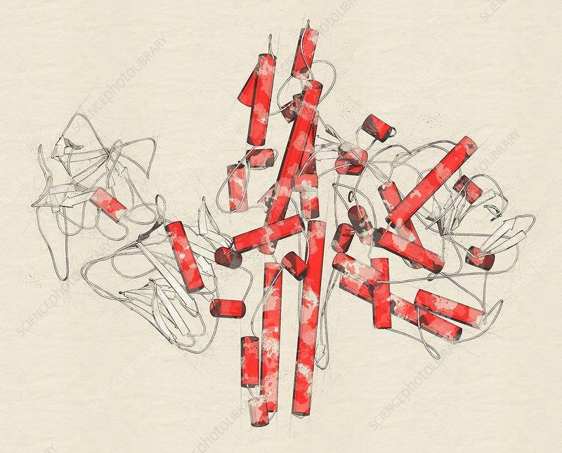 Botulinum toxin molecule, illustration