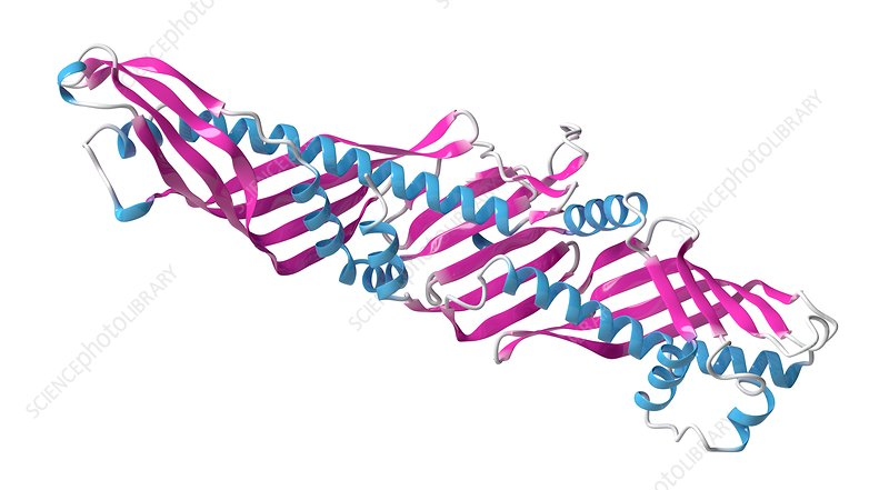 CETP protein molecule, illustration