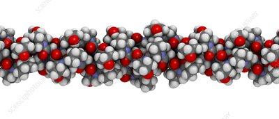 Collagen protein molecule, illustration