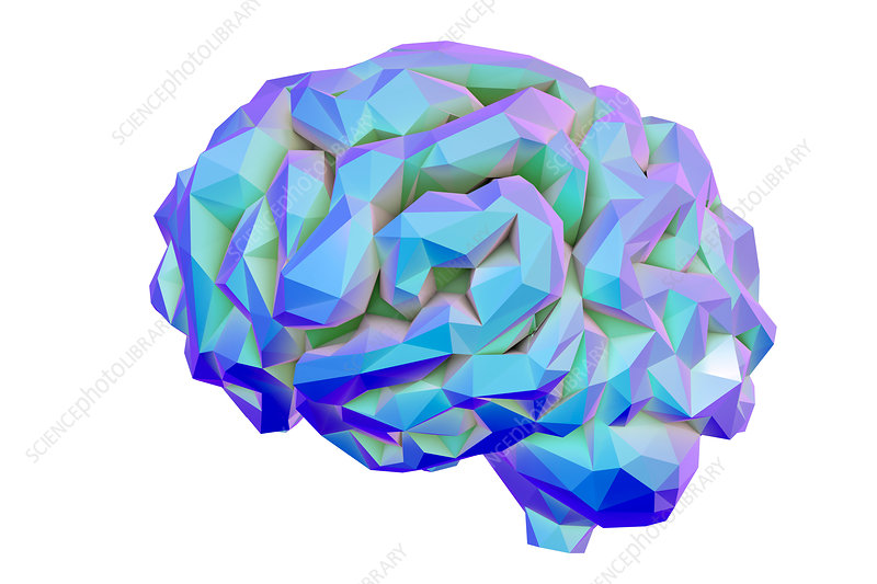 Human brain, low-polygonal illustration