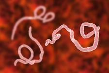 Ebola virus particles, illustration