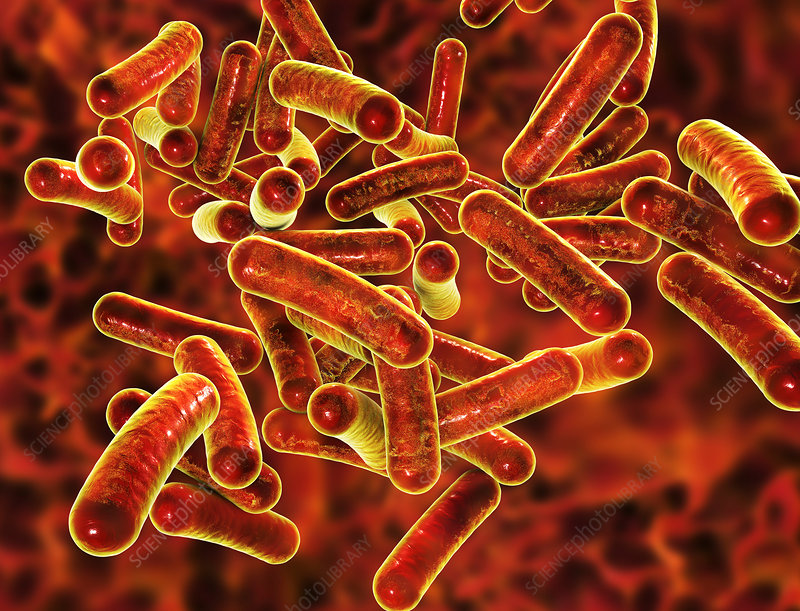 Shigella bacteria, illustration