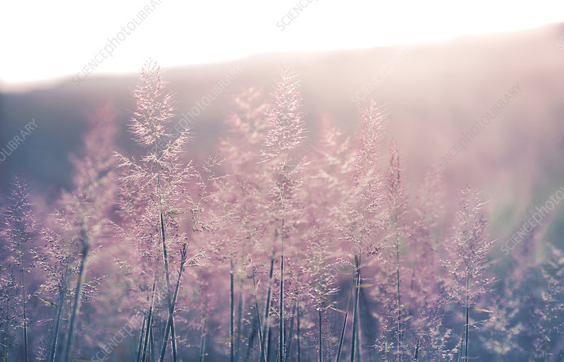Wild grasses in sunlight