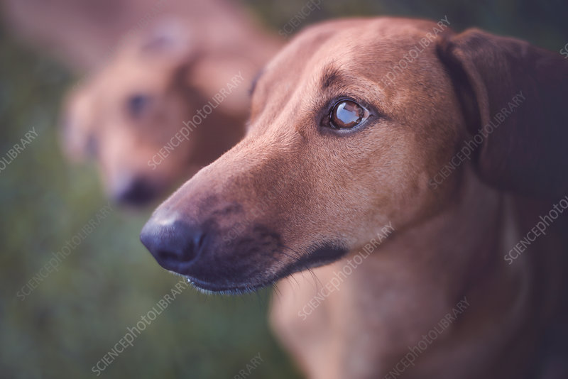 Dog looking away, portrait