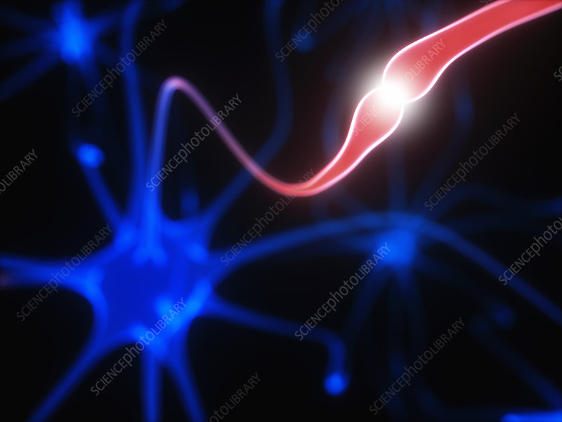 Nerve cells and electrical pulses, illustration