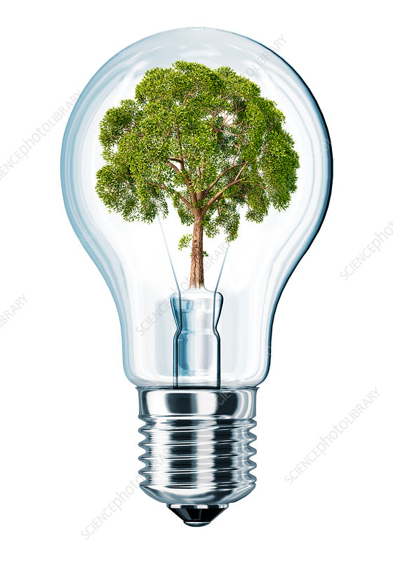 Light bulb with tree, illustration