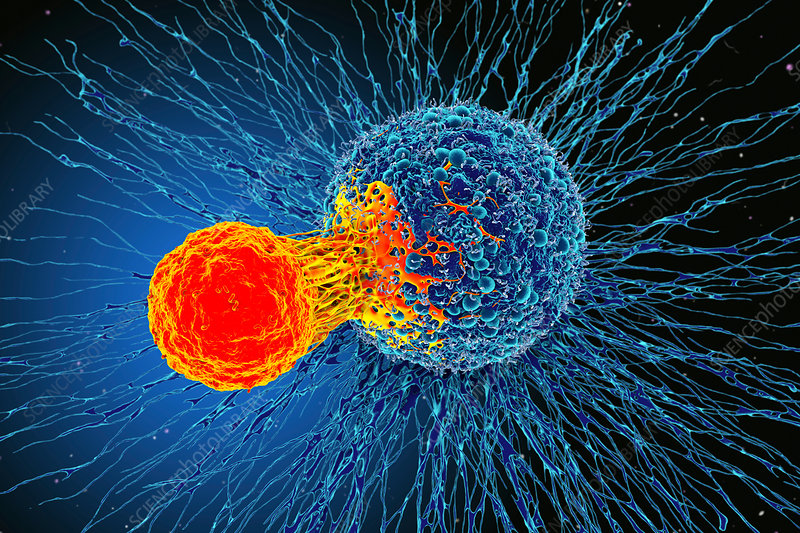 Cancer cell and T cell, illustration