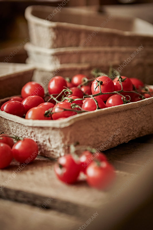 Fresh vine cherry tomatoes in container