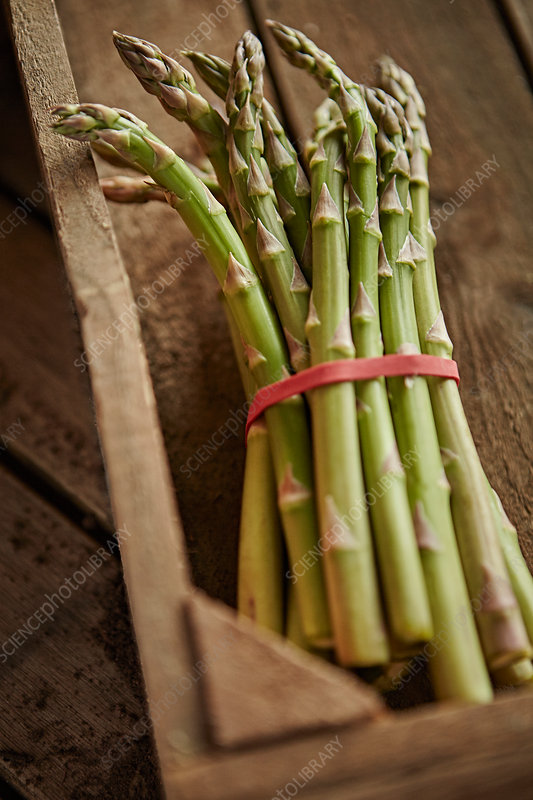 Fresh asparagus bunch in wood crate