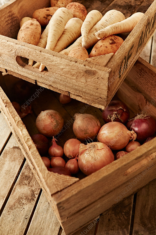 Fresh root vegetables in wooden crates