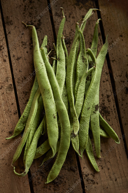 Fresh, rustic, dirty green bean pods on wood