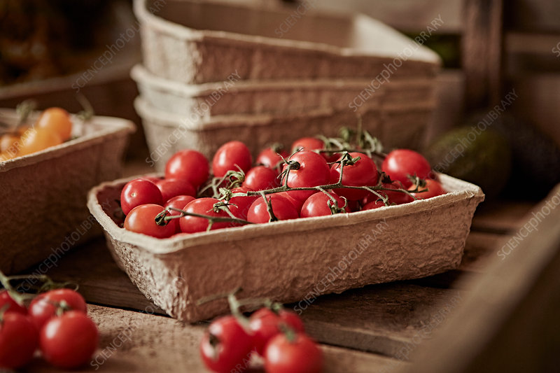 Fresh, red vine cherry tomatoes in container
