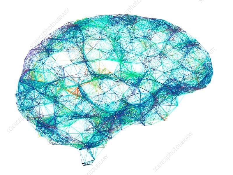 Brain, neural network, illustration