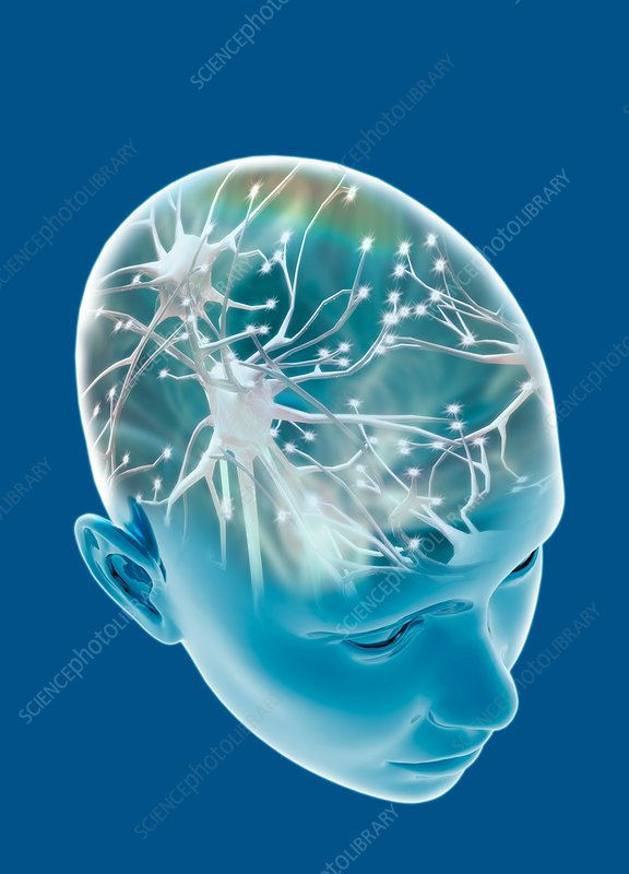 Human head with nerve cells, illustration