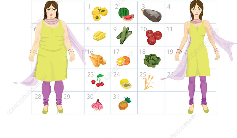 Diet calendar for fat to thin, illustration