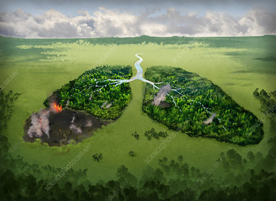 Illustration of burning lungs