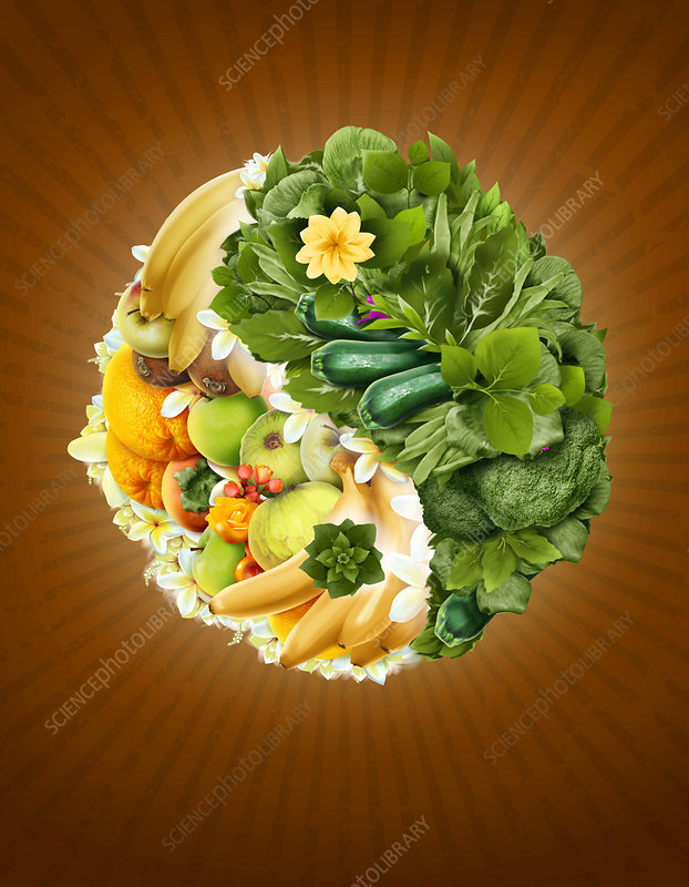 Illustration of fruits and vegetables in yin yang symbol