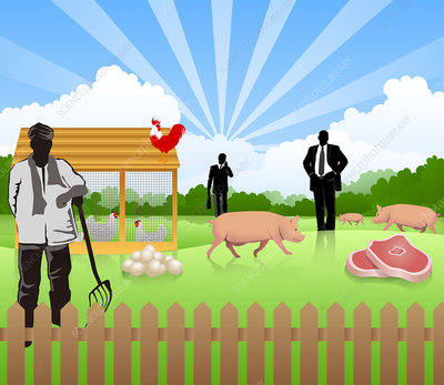 Illustration of poultry business