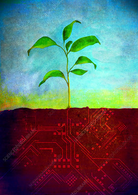 Plant growing on a computer board, illustration