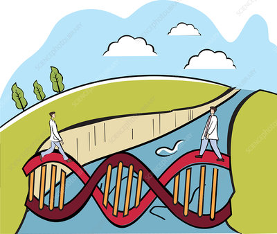 Two scientists crossing a DNA bridge, illustration