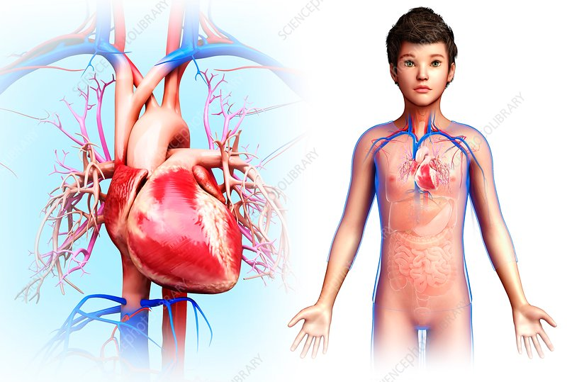 Child's heart, illustration