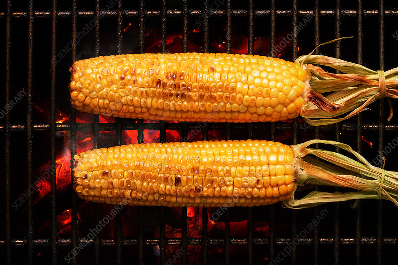 Corn on the cob on barbecue