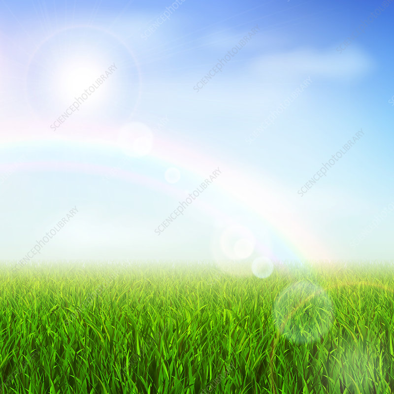 Field with rainbow, illustration