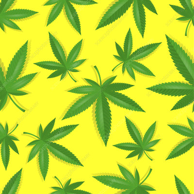 Cannabis leaves, illustration