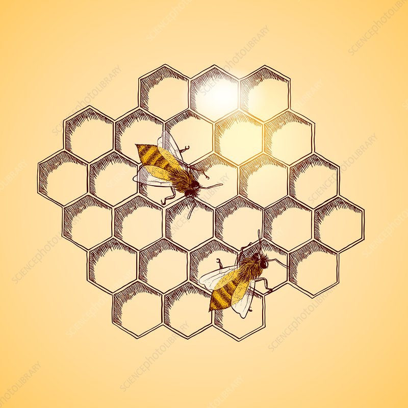 Honey bees and honeycomb background, illustration