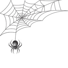 Spider, illustration