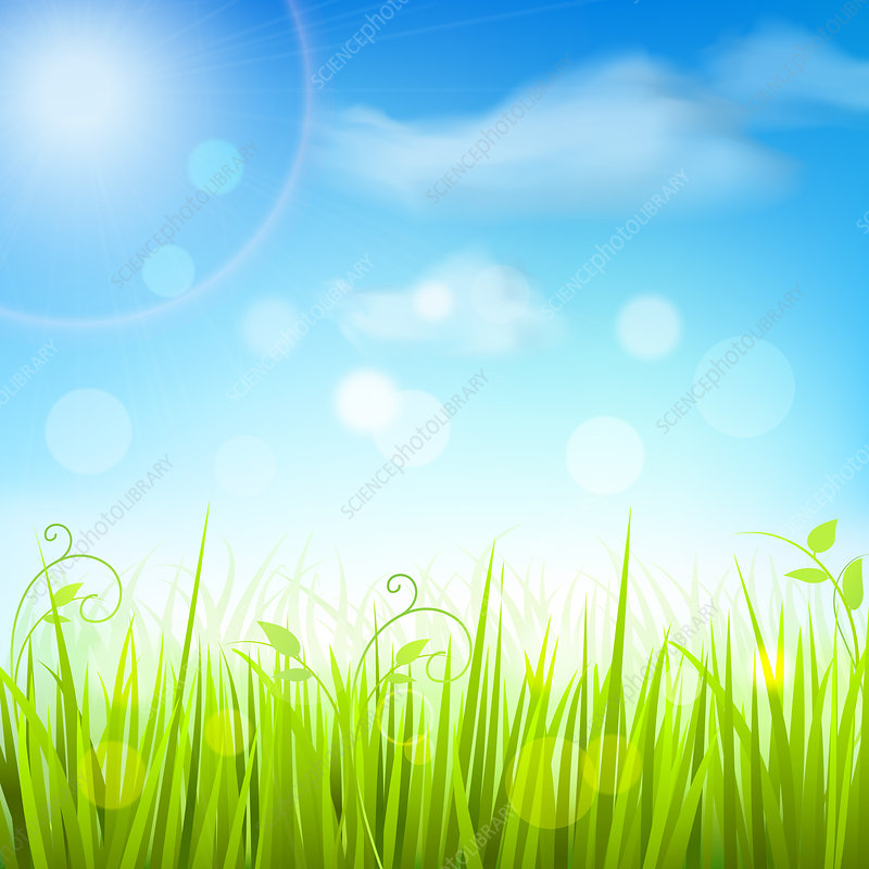 Grass and blue sky, illustration