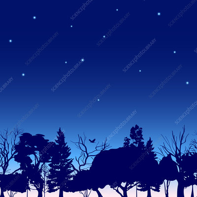 Night sky, illustration