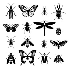 Insects, illustration