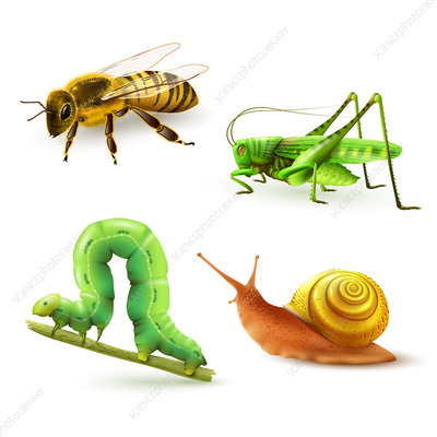Insects and snail, illustration