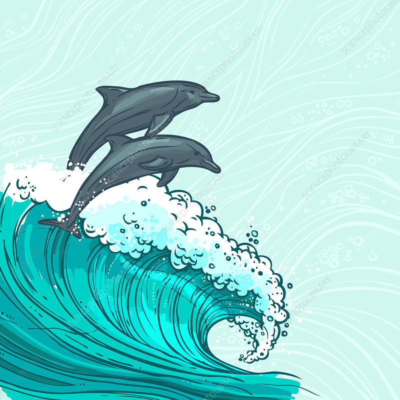 Ocean and dolphins, illustration