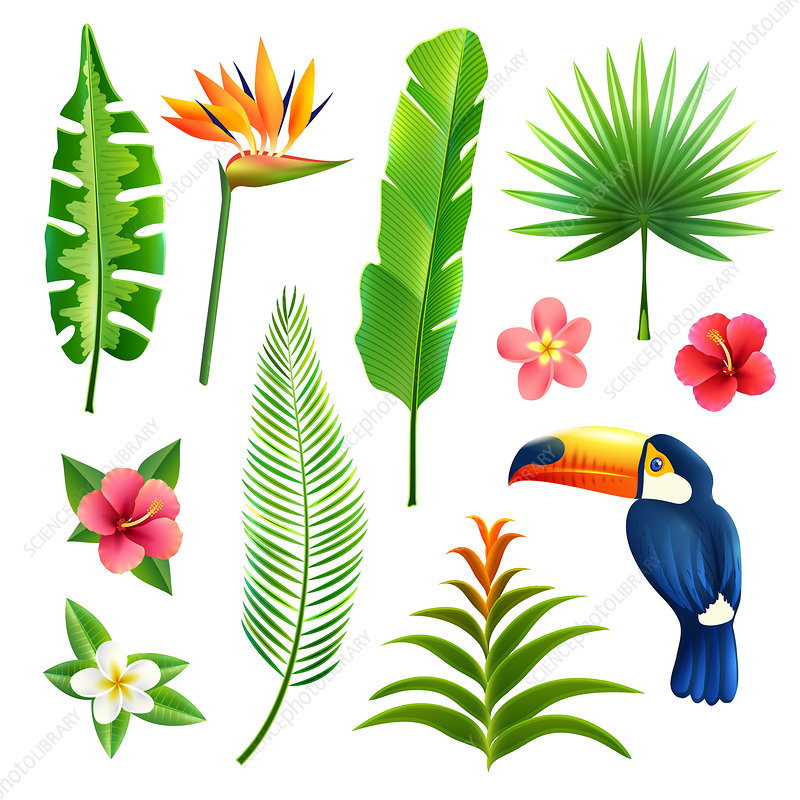 Tropical plants and toucan, illustration