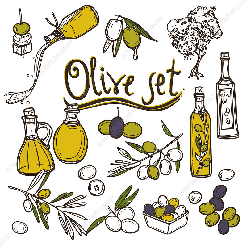 Olive oil, illustration