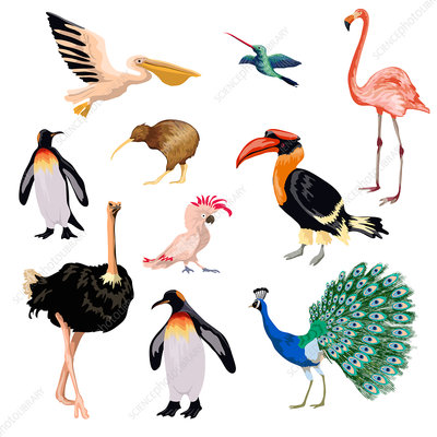 Exotic birds, illustration