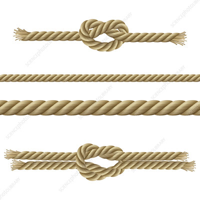 Ropes and knots, illustration