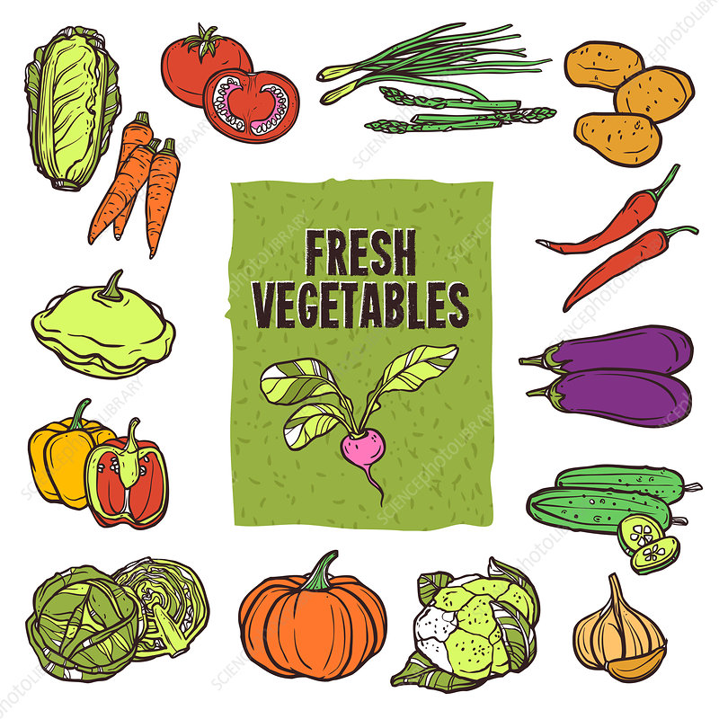 Vegetables, illustration
