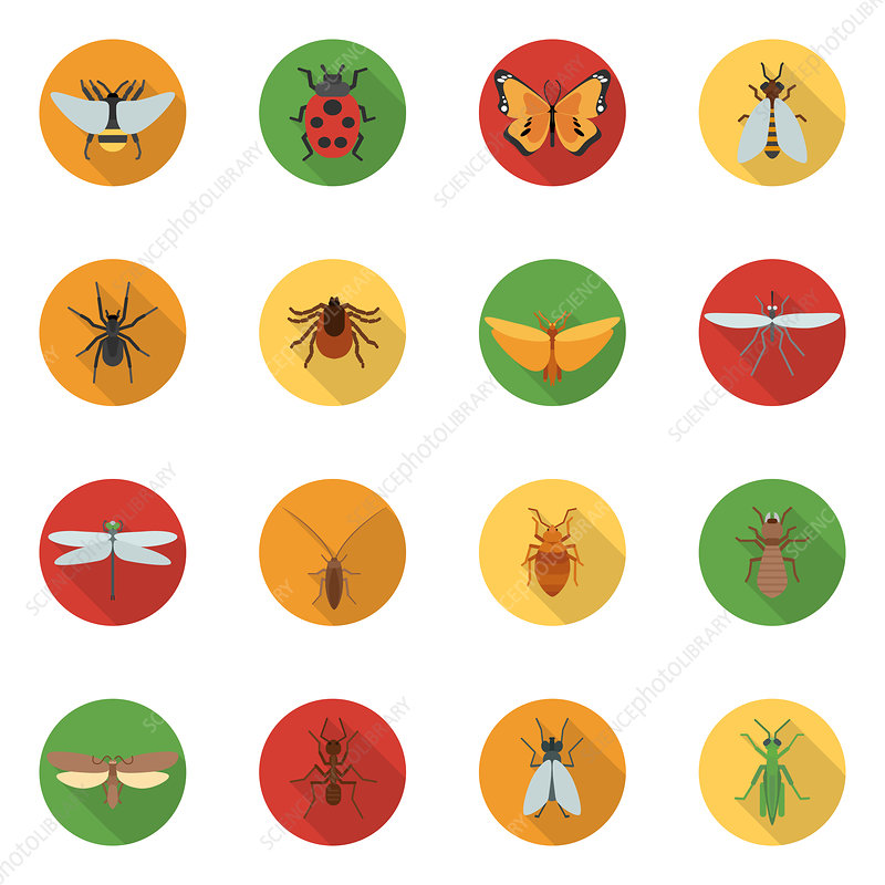 Insect icons, illustration