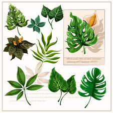 Leaves, illustration
