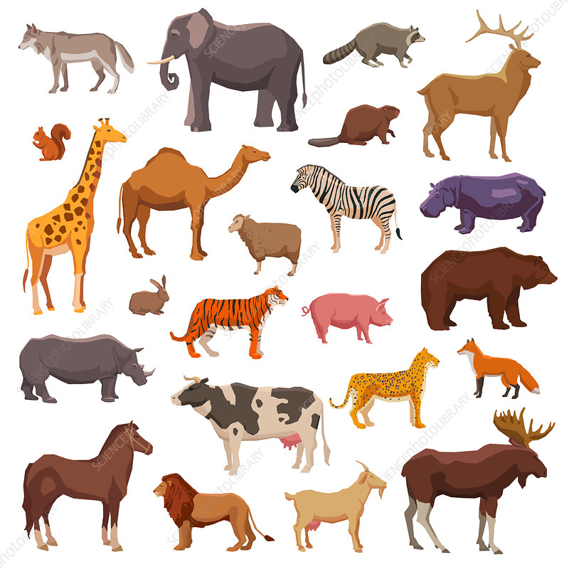 African animals, illustration