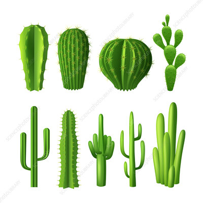 Cactus icons, illustration