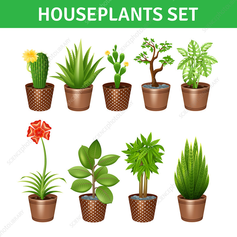 Houseplant icons, illustration