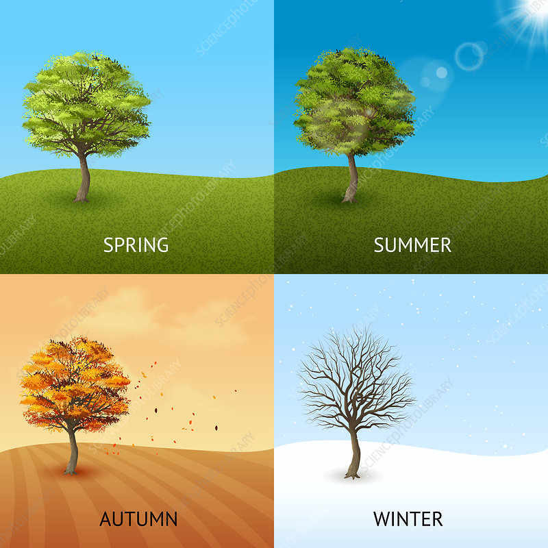 Four seasons, illustration